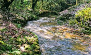 Sensational Travel Tales from Meghalaya, India