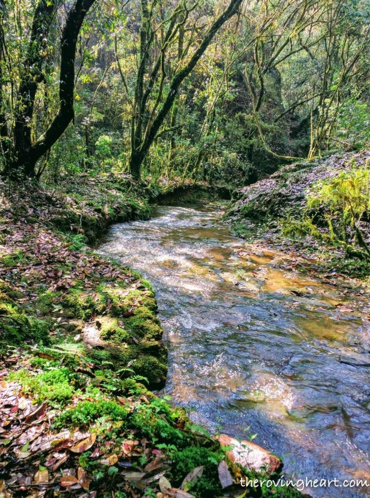 Sacred forest Mawphlang Meghalaya stories demon snake