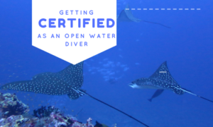 Getting Certified As An Open Water Diver – The Roving Heart