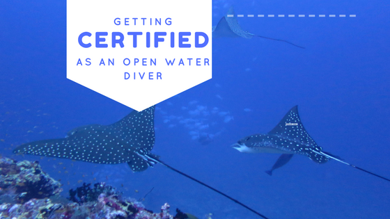 Getting Certified as a PADI Open Water Diver - The Roving Heart