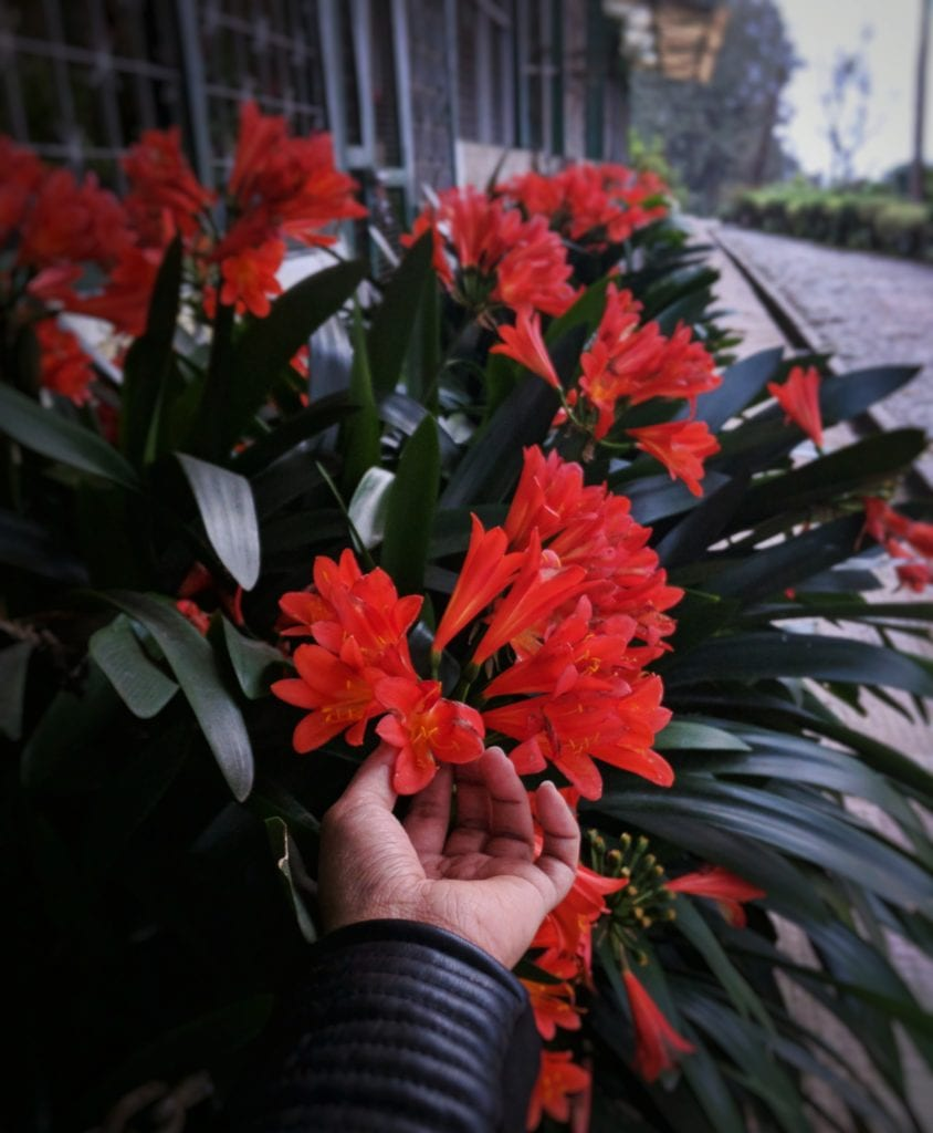 Things to do in Gangtok flower show rhododendron