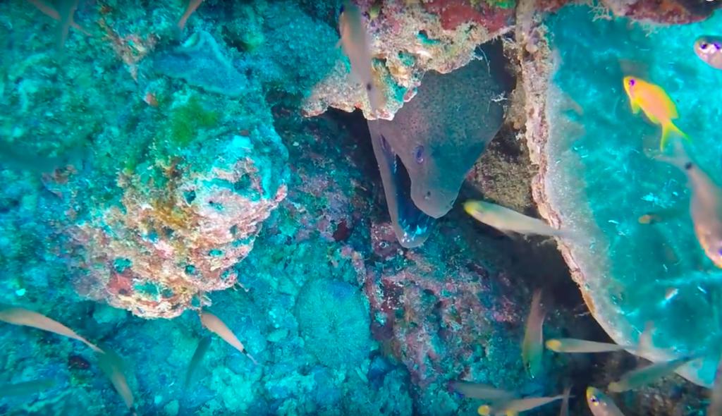 malindi kenya best scuba diving in the world