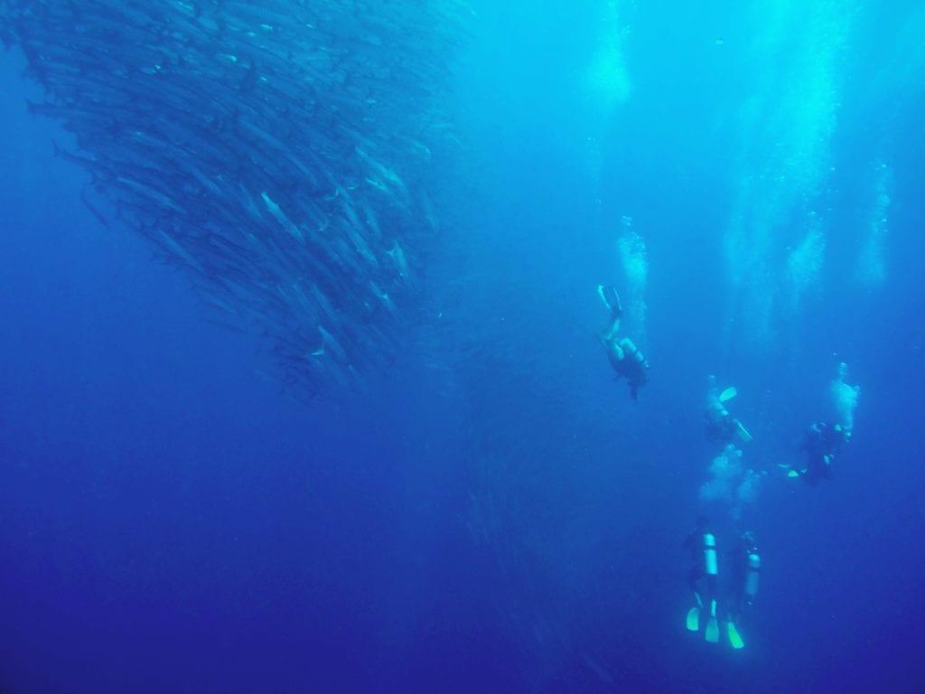 sipidan borneo malaysia, best diving in the world, best scuba diving in the world