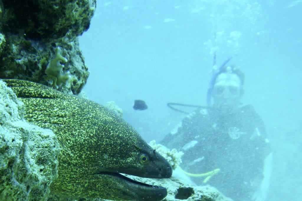 berlengas islands portugal best scuba diving in the world