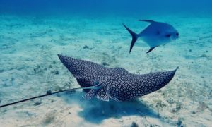 Best Scuba Diving Locations in the World For a Lifetime