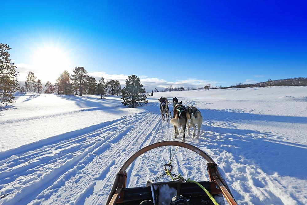 Dog sledding in Tromso Norway, unique bucket list ideas, cool bucket list ideas