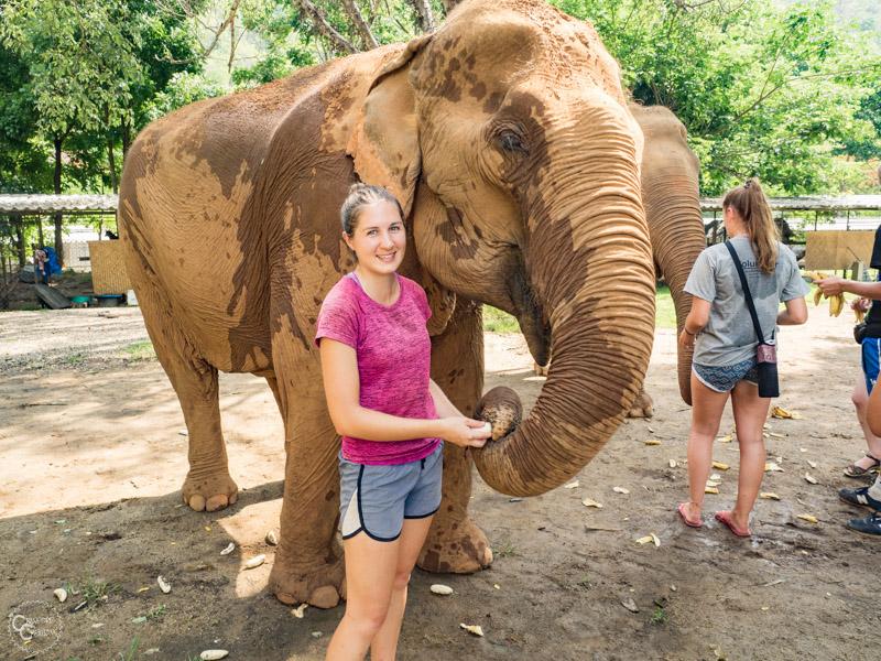 Volunteering elephants chiang mai thailand, unique bucket list ideas, cool bucket list ideas