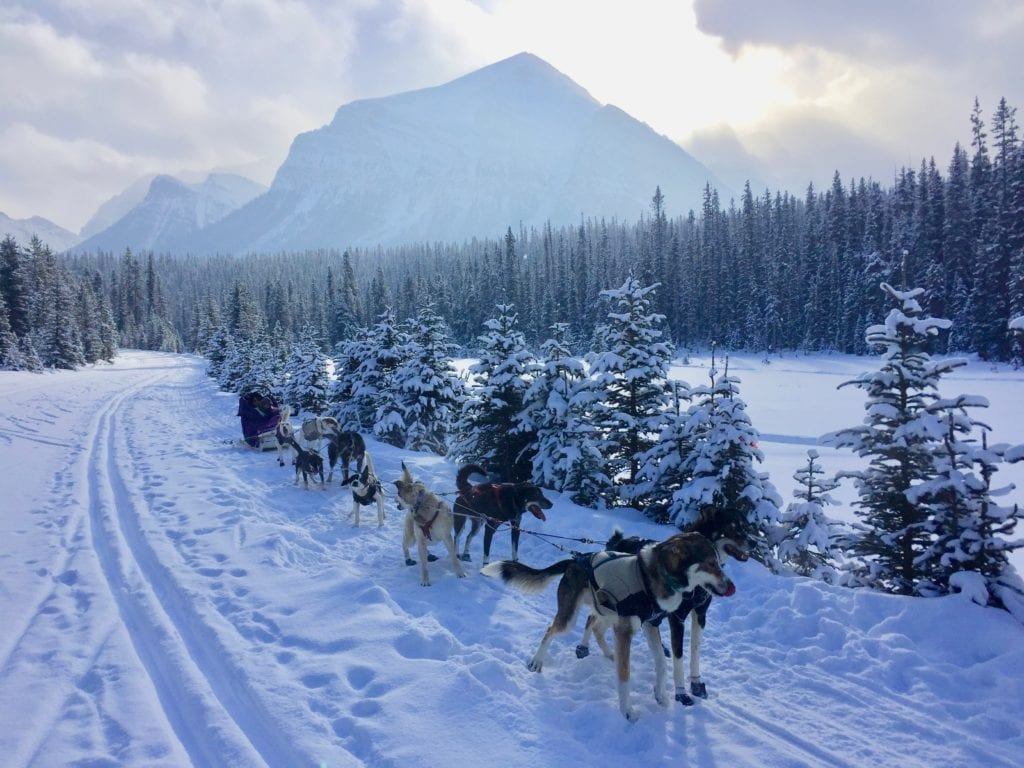 dog sledding canada, unique bucket list ideas, cool bucket list ideas