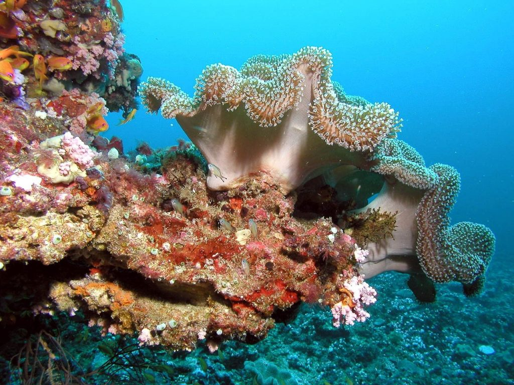 scuba diving maldives water sports activities, water sports in maldives, water activities in maldives